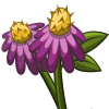Purple Coneflower-icon