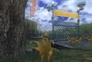Chocobo Circuit