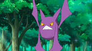 Brock Crobat
