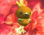 Torchic SSBB
