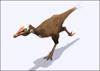 Alvarezsaurus - Dinosaur Planet Wiki | 350 x 250 jpeg 14kB
