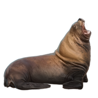 Huge item stellersealion 01