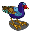 Purple Gallinule-icon