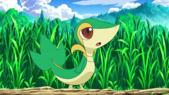 Pokémon de Inicio