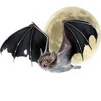 Huge item vampirebat 01