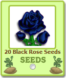 Giftable Black Rose Seeds