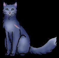 bluestar warrior cats fan page wiki