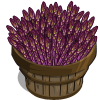 Purple Asparagus Bushel-icon