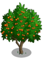 Golden Apricot2-icon