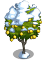 Ponderosa Lemon8-icon