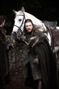 Ned &amp; his horse
