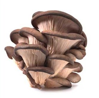 how to grow oyster mushrooms commercially