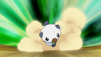 EP673 Oshawott usando tacleada