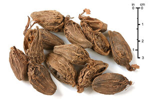 Black cardamom