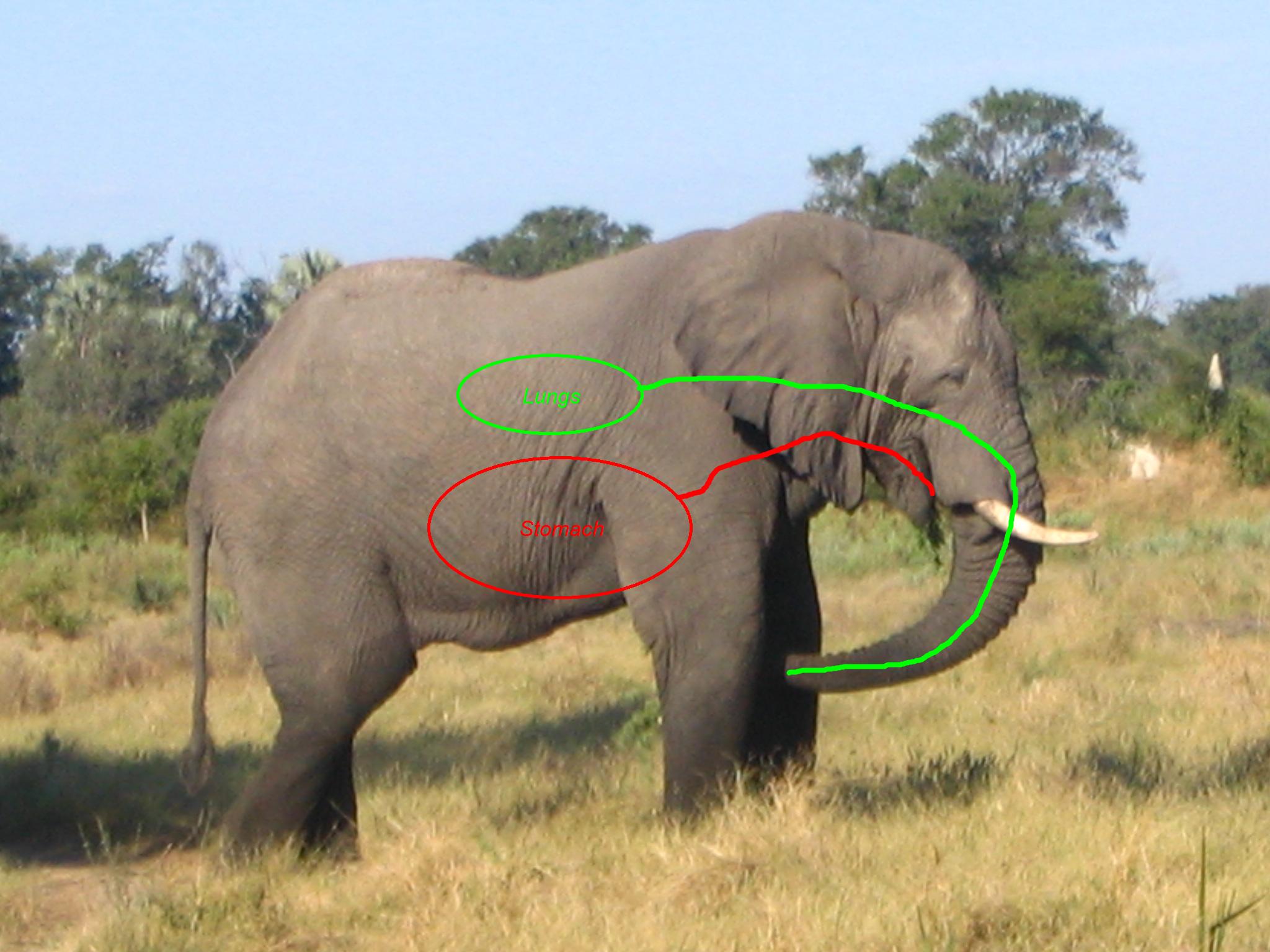 Система Elephant