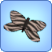 Zebra Butterfly