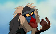 Rafiki-rafiki-2227567-667-478