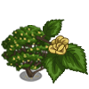 Wych Elm-icon