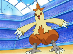 May Combusken