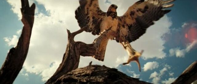 640px-The_Meerkats_-_Eagle_vs_Meerkat.jpg