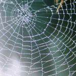 Herbs of the clans Cobwebs