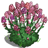 Red Valerian-icon
