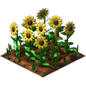 Crop Sunflower Grown SW icon.png