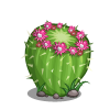 Pincushion Cactus-icon