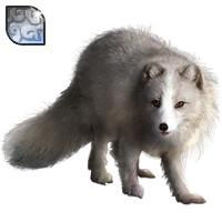 Huge item arcticfox diamond 01