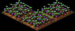 Eggplant3.png