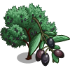 Picholine Olive Tree-icon