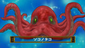 Bottom Octopus