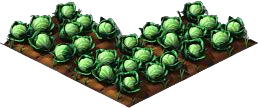 Cabbage5.png