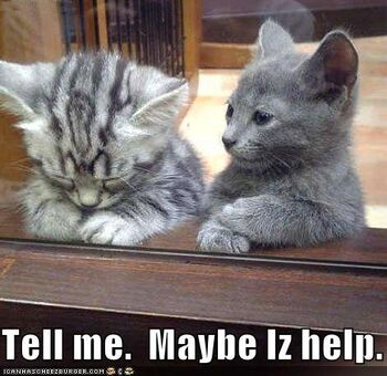 Funny-pictures-kitten-offers-to-help-sad-friend