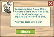 White mustang foal message