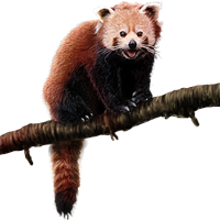 Huge item redpanda 01