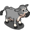 Gray Jersey Cow-icon