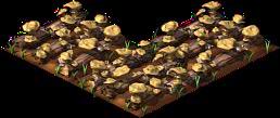 Mushroom4.png