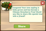 Chinese Strawberry Tree Message
