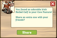 Irish Moiled Calf Cow Pasture Message