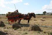 Horse and cart transport of harvest - barleylands 2011 -IMG 6220