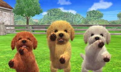 Toy Poodle kutyák a Kennelben (3DS verzió)