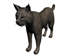 300px-Lince2.png