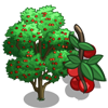 Montmorency Cherry Tree-icon
