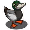 Great Scaup Duck-icon