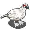 Snow Chicken-icon