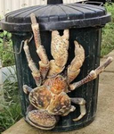 Coconutcrab