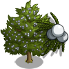 Eastern Red Cedar-icon