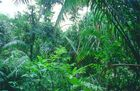Tropical-rain-forest