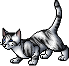 Ivypool.apprentice